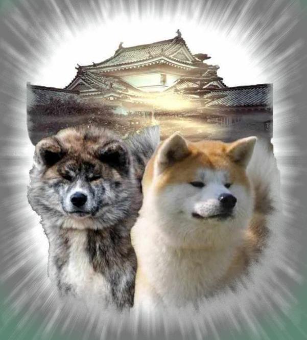 Akita Rassenhunde Frey
